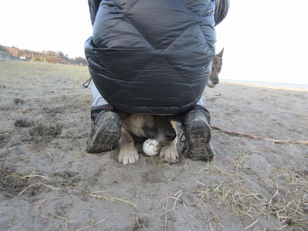 犬が股に潜り込むのはなぜ?