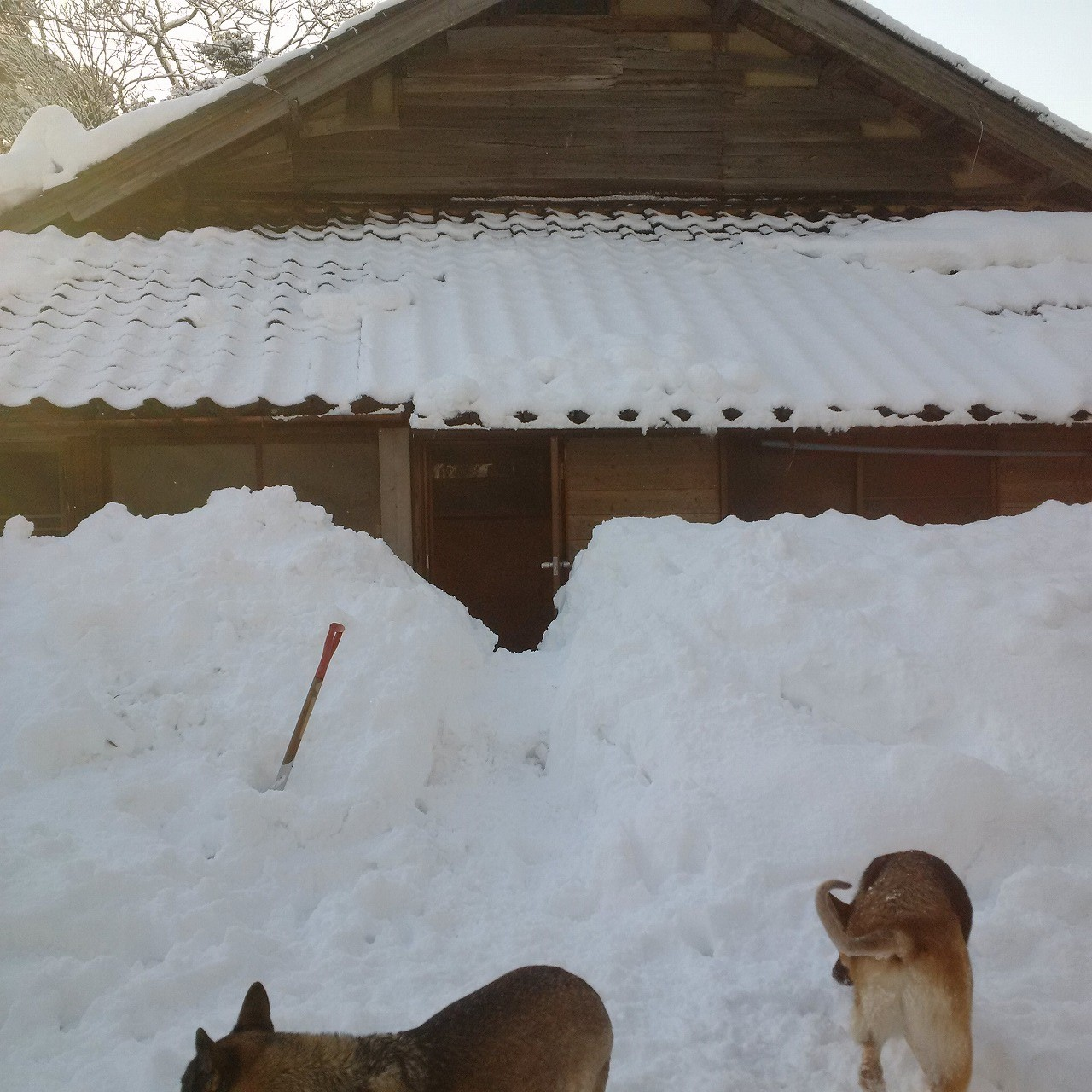 2018年の冬は雪があまり降らなかった
