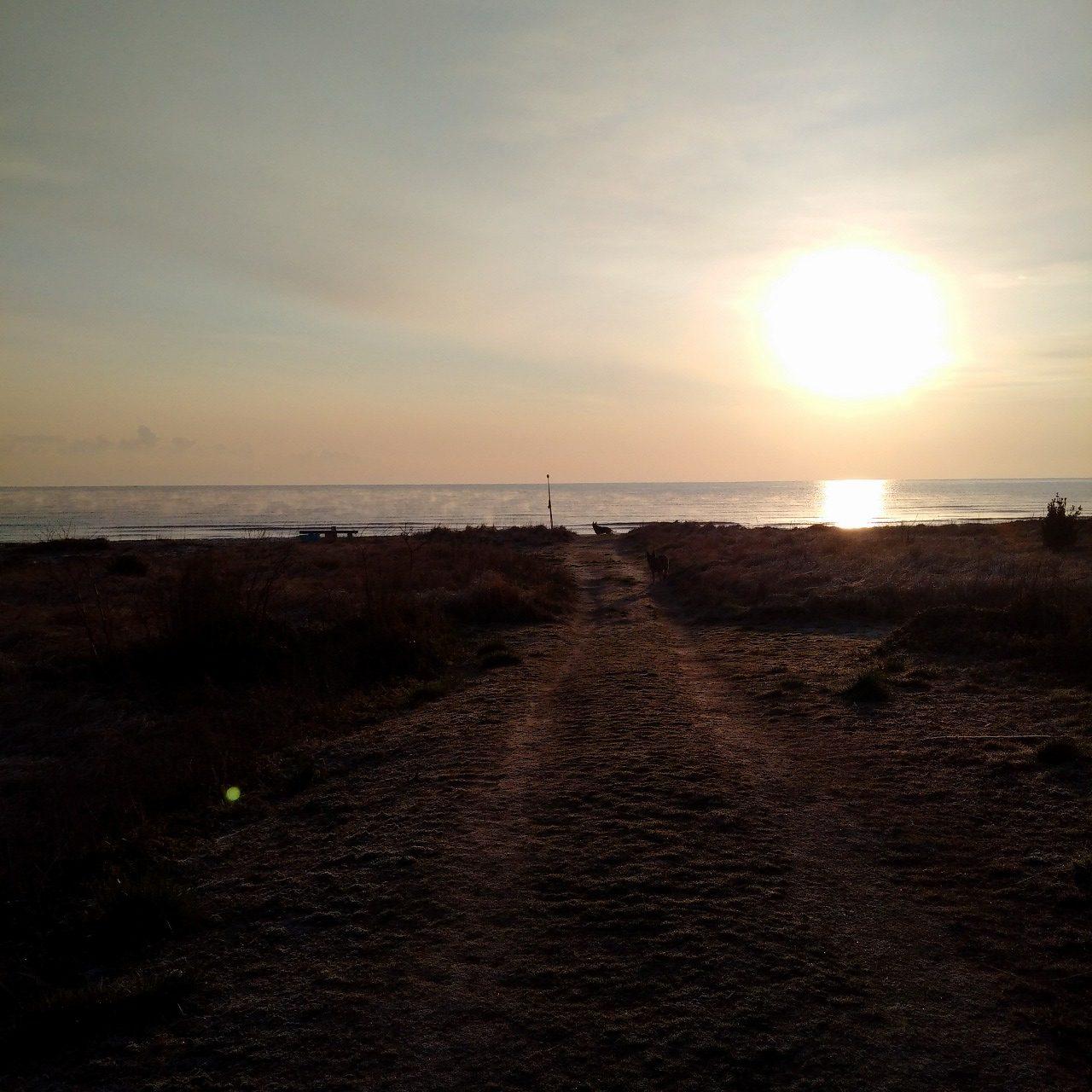 海へと続く散歩道が今日は特にきれいだった