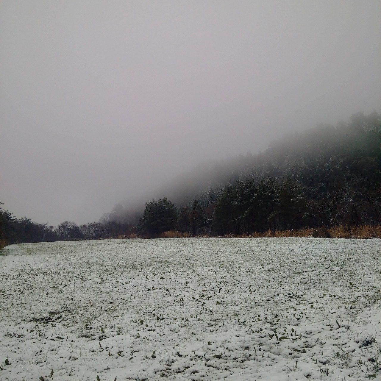 季節外れの雪に山の獣たちが引っ込んだ