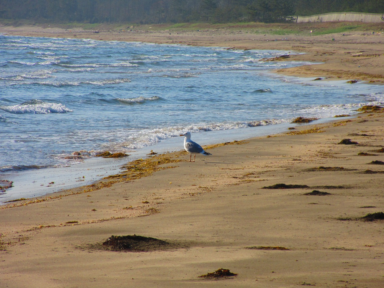 砂浜に落ちている鳥の卵は安全?親鳥の観察が心温まる