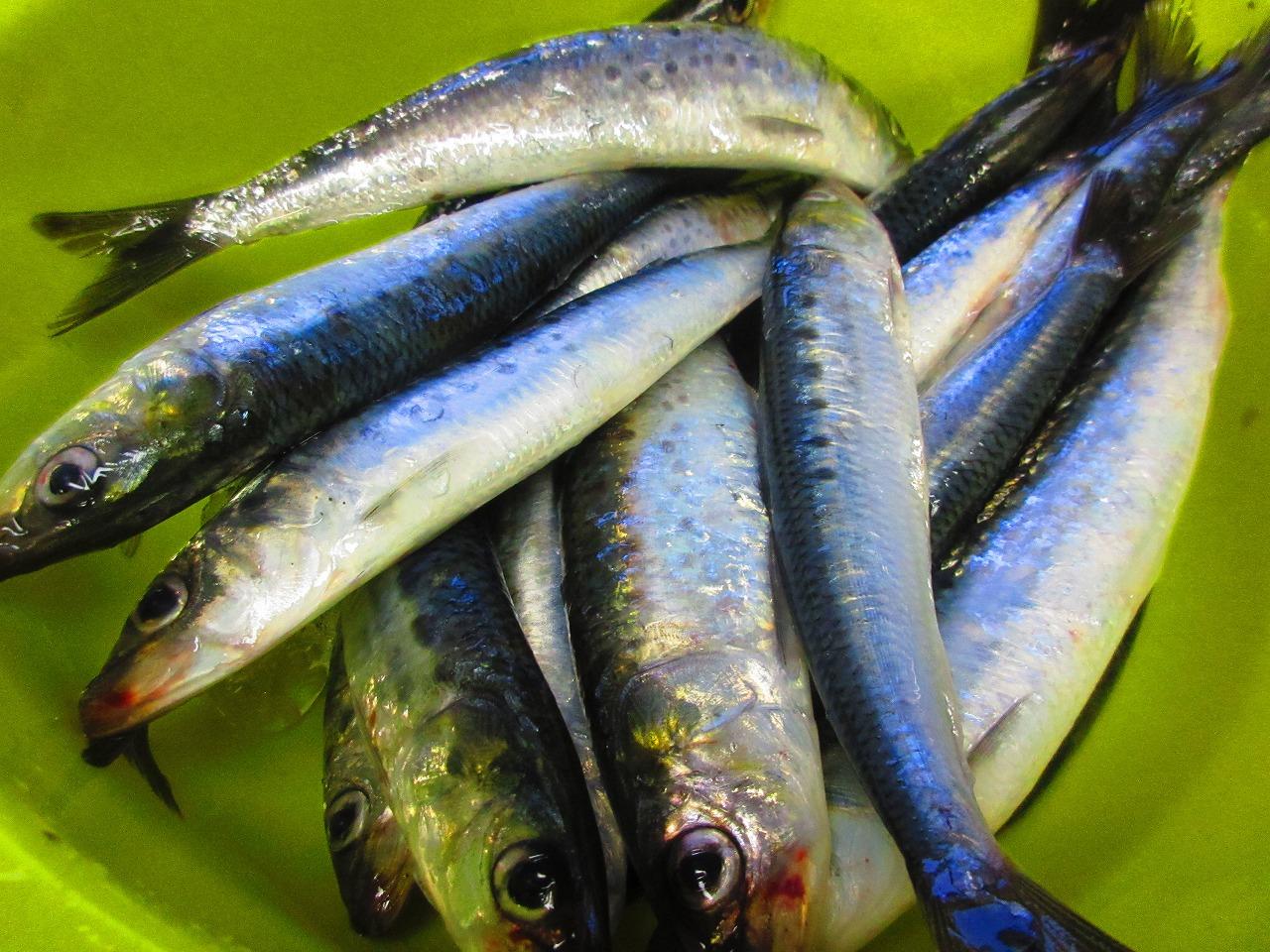 もりもり寿司が一番旨い!奥能登の魚を食べるなら火・水に注意