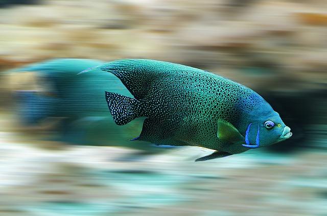 【能登で魚突き】魚突きに関する初心者向けの話を動画を交えて説明